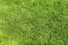 Im Frühling beginnt die Pflege: Jetzt braucht der Rasen nach dem langen Winter wieder Kraft, um zu wachsen. Zuerst sollte man nach dem Winter das Restlaub und Äste vom Rasen entfernen. Zur Rasenpflege gehört am Anfang im Frührjahr, das vertikutieren, um d